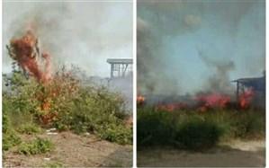 آتشسوزی در تالاب میانکاله