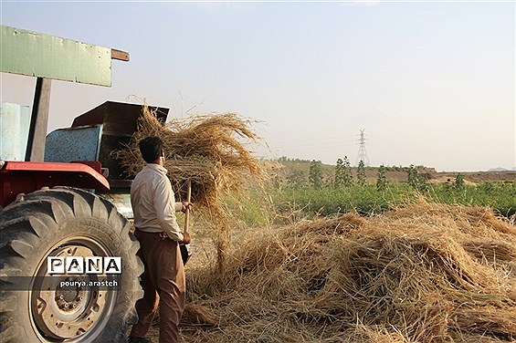خرمن کوبی گندم درشهرخوسف  خراسان جنوبی