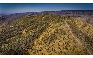 هیچ موردی از قطع درخت کهنسال در حوزه منابع طبیعی کلات نداشته ایم