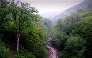 اجرای طرح زراعت چوب در عرصههای منابع طبیعی لارستان