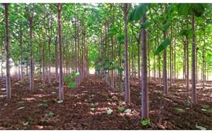 اجرای  طرح« زراعت چوب» و جلوگیری از تخریب جنگلها مستلزم همکاری سه قواست