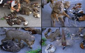 فروشنده گونههای تاکسیدرمی شده دستگیر شد