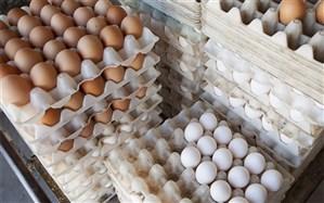 اجرای کامل طرح بستهبندی تخم مرغ در البرز
