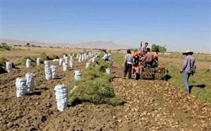صادرات سیبزمینی تا اطلاع ثانوی بدون پرداخت عوارض مجاز شد
