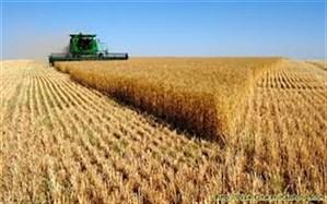 افزایش ۱۸ درصدی خرید گندم در آذربایجان شرقی
