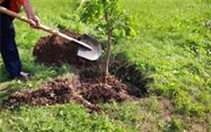 ۱۰۰ میلیون درخت مثمر تا سال ١۴٠۴ کاشته میشود