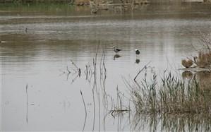 آب از سد رودشتین به سمت تالاب بینالمللی گاوخونی اصفهان رهاسازی شد