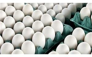 توزیع تخم مرغ با نرخ مصوب در کشور آغاز شد