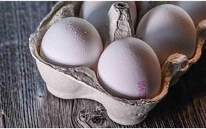 قیمت تخممرغ پایین است!