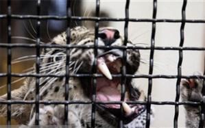 وجود باغ وحش به سود حیات وحش است؟