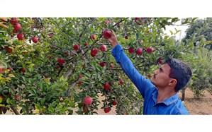 رسول، پسری که میوه زحماتش را چید