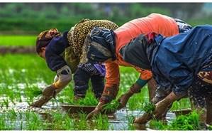 مدیریت تولید، بهداشت و بازار موجب امنیت غذایی می شود