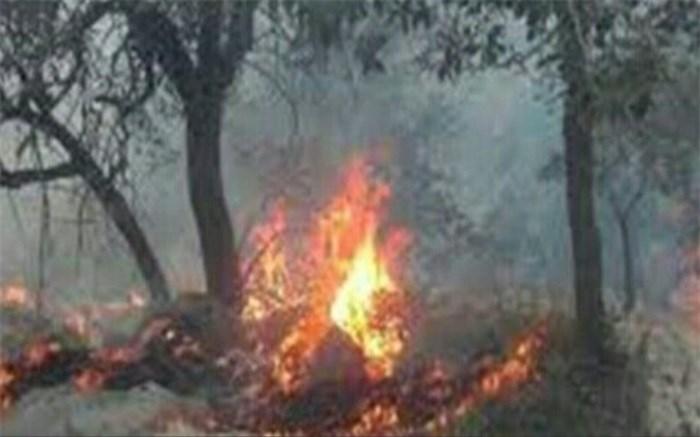 مهار آتش سوزی جنگلهای دشتک شهرستان دنا