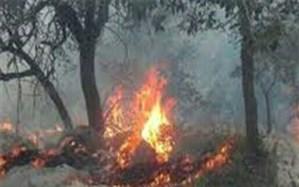 """مهار آتش سوزی جنگلهای """"دشتک"""" شهرستان دنا"""