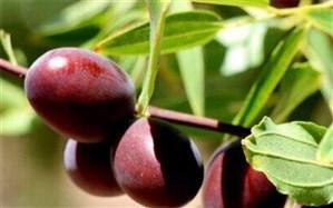 میوهای موثر در درمان سرفههای کرونایی