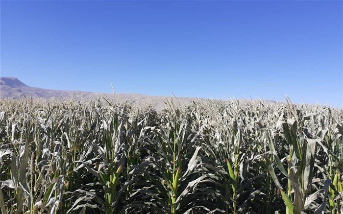 جهاد کشاورزی