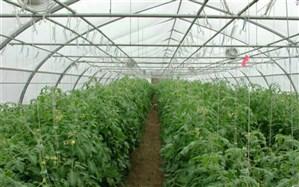 سالانه 48 هزار تن محصول از گلخانه های سیستان و بلوچستان برداشت می شود