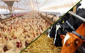 موافقت دولت با ایجاد شهرک های تخصصی نهاده ها و عوامل تولید وارداتی کشاورزی