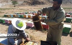 آغاز برداشت عسل کٌنار از زنبورستانهای شهرستان  لالی