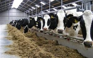 احتمال افزایش قیمت شیرخام در هفته آینده