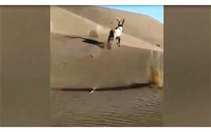 پرونده تخلف برای آفرود سواران مُخرب محیط زیست اصفهان تشکیل میشود