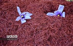 ۱۹۰ میلیون دلار زعفران ایرانی صادر شد