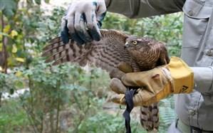 کشف پرنده شکاری از فرد متخلف در غرب استان تهران