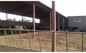 اعطای تسهیلات به 5 واحد دامداری اسلامشهر برای احداث سیستم تصفیه فاضلاب
