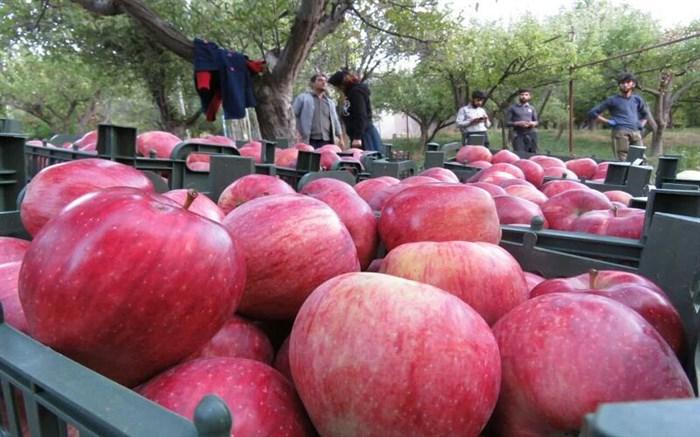 ذخیره سیب