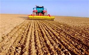 کشت محصولات پاییزه در شهرستان خاش به ۳۵۰۰ هکتار رسید