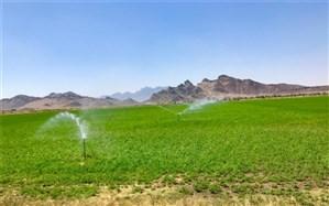 42 هزار هکتار از  اراضی کشاورزی سیستان و بلوچستان  به سیستم نوین آبیاری مجهز است