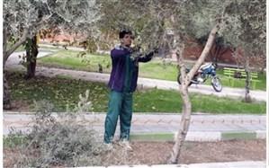 آغاز هرس پاییزی درخت و درختچههادر شهرستان قرچک