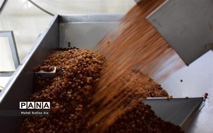 برداشت انگور و خط تولید کشمش در شهرستان ملکان