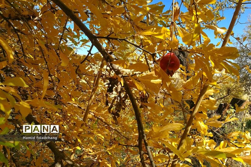 پاییز هزار رنگ باغهای شهرستان نی ریز