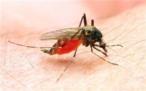 هشدار سازمان جهانی بهداشت نسبت به افزایش قربانیان مالاریا