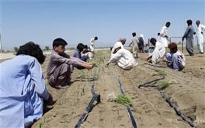 ٣٠٠٠ هکتار محصولات پاییزه در شهرستان راسک کشت شد