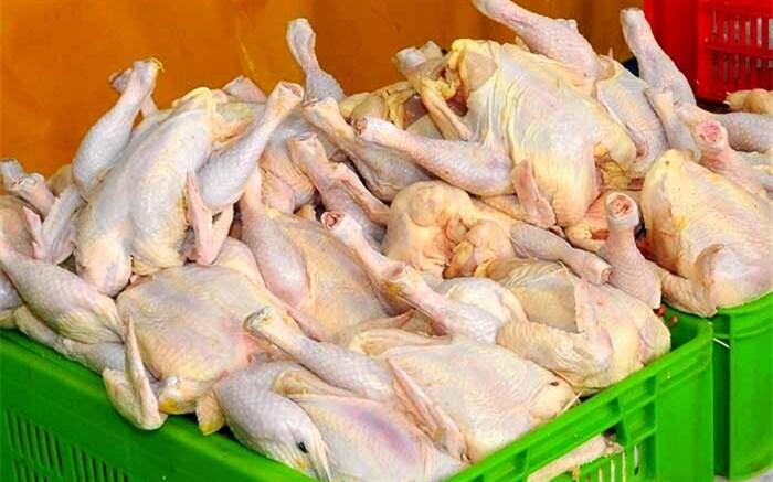 درتوزیع مرغ