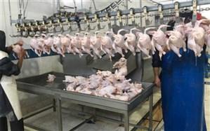 ظرفیت تولید گوشت مرغ در سیب و سوران به ٣۵٠٠ تن در سال ارتقا مییابد