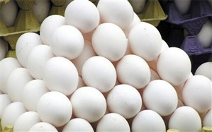 جریمه ۹۹ میلیون تومانی متخلفان صنف مرغ و تخم مرغ