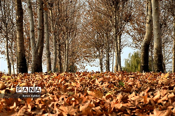 پاییز رنگارنگ تهران