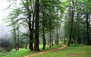 جنگلهای شمال ایران سالانه 3/6 میلیارد مترمکعب آب ذخیره می کنند