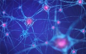 ویروس کرونا میتواند وارد مغز شود
