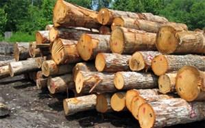 زراعت چوب با بهرهگیری از زمینهای بدون استفاده در مازندران
