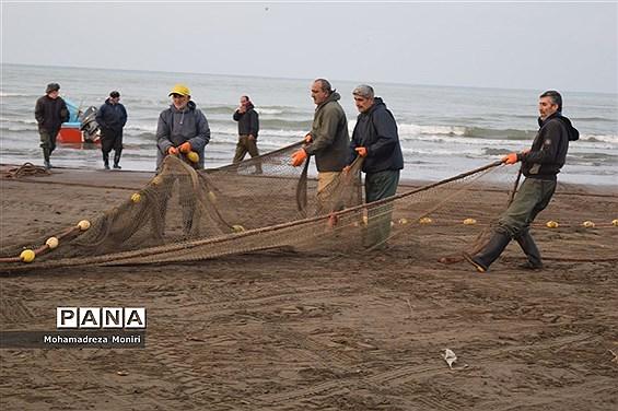 صید ۱۲.۵ هزارتن ماهی کیلکا دریای خزر طی ۹ ماهه امسال
