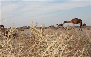 100 درصد مساحت تالاب جازموریان خشک شد