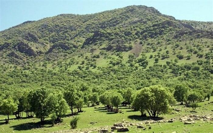 اجرای پروژههای جنگلکاری برای کنترل سیل در گیلان