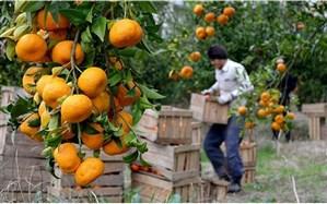 ذخیره سازی ۴۰ هزار تن  میوه  برای شب عید