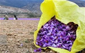 ۲۷ مهر به عنوان روز ملی زعفران ثبت شود