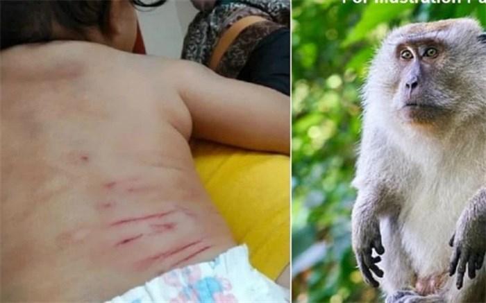 حمله مرگبار میمون به نوزاد ۵ ماهه