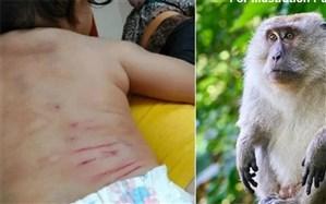 حمله میمون به نوزاد